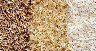 فروش برنج شمال