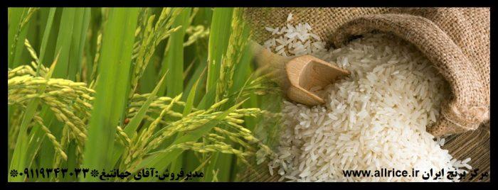قیمت برنج طارم هاشمی
