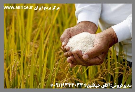 خرید برنج حسن سرایی