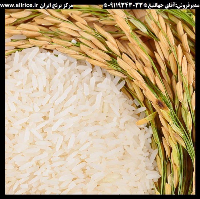 برنج فجر سوزنی