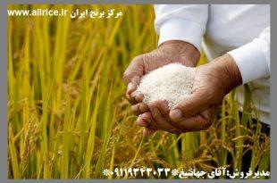 قیمت عمده برنج ایرانی در بازار