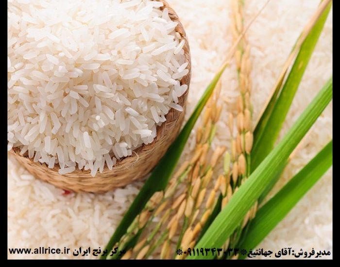 برنج شمال ایران