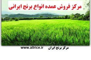 خرید برنج ارزان قیمت در بازار