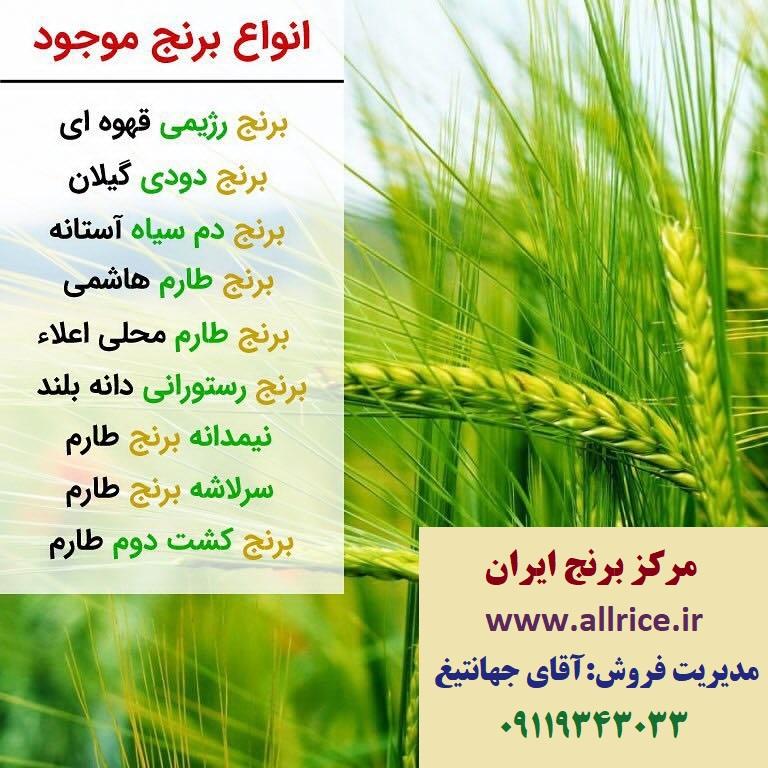 خرید برنج علی کاظمی