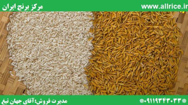 قیمت برنج دم سیاه سال 99