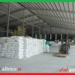 صادرات برنج دم سیاه