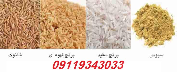 فروش شالی برنج