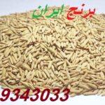 قیمت شالی برنج